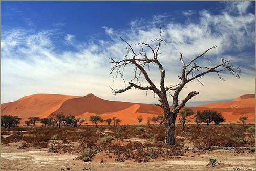 Afrika - Page 6 Afrika_510